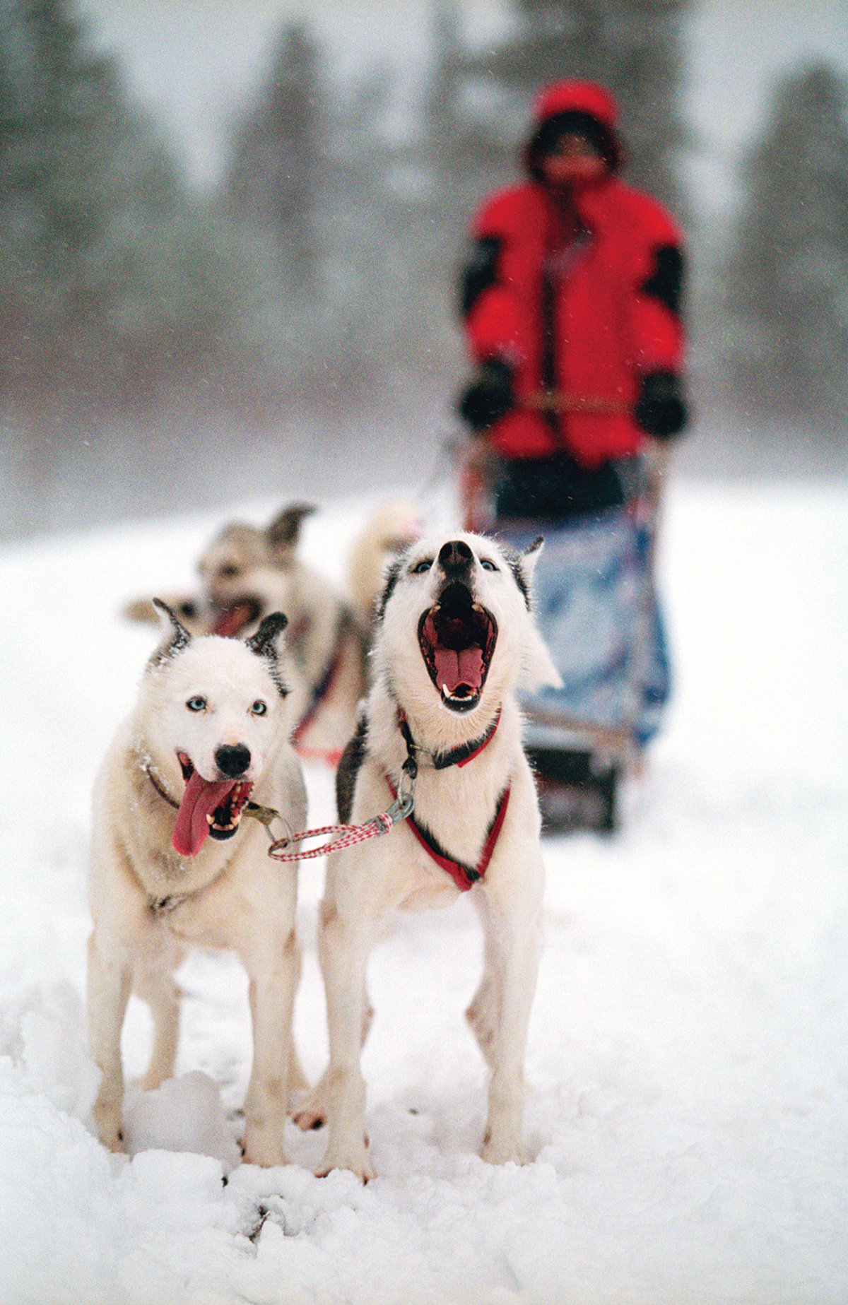 Dogsledding Along the Quaboag River