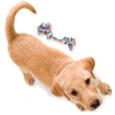 2012-dogtrainer1