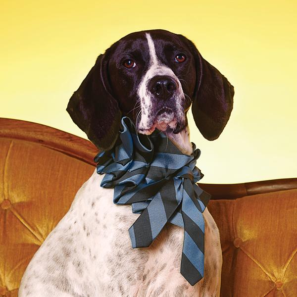 dog ascots