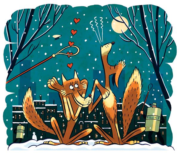 coyote mating season city boston