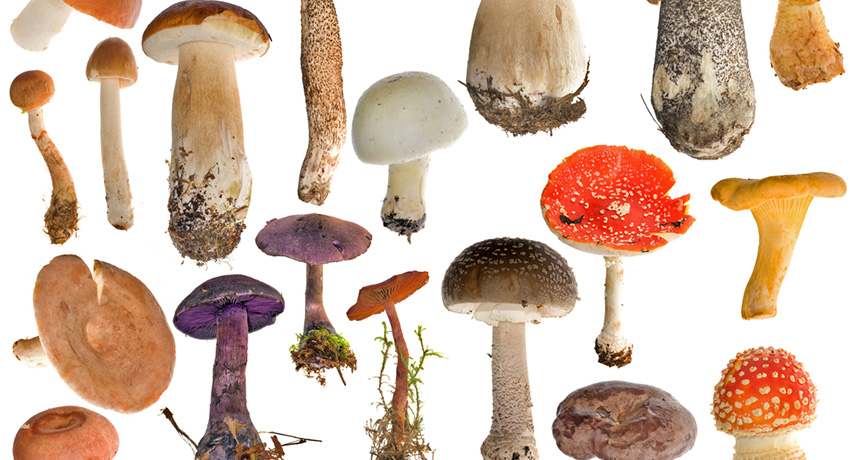 Mushrooms image via Shutterstock