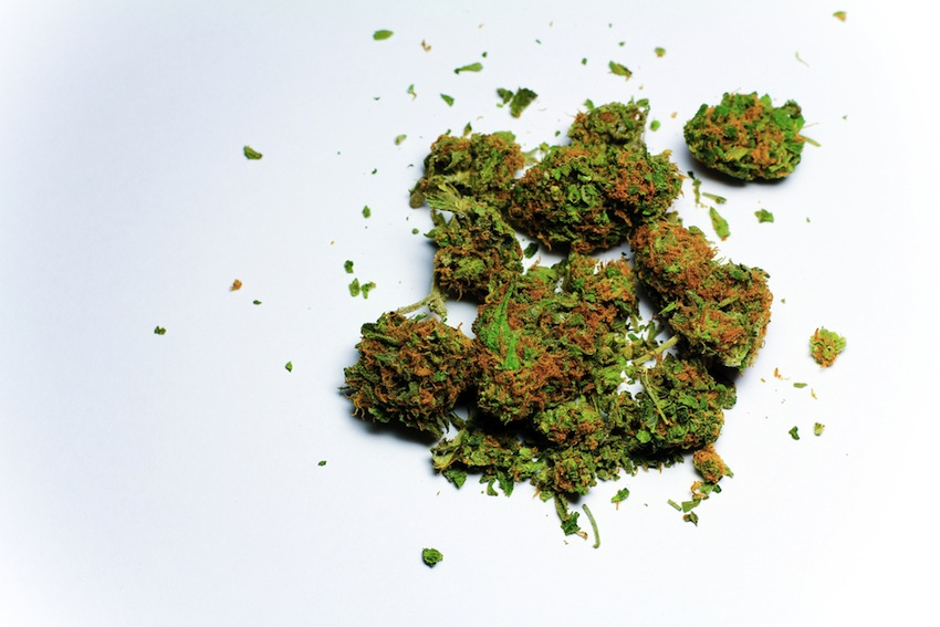 Marijuana photo via shutterstock.com