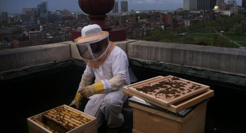 Noah Wilson-Rich installing honeybee hives on the roof of the Taj Hotel. Photo provided