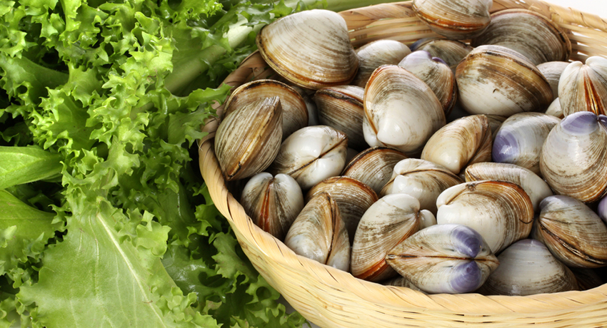 Clams photo via shutterstock