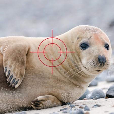 seals-sq