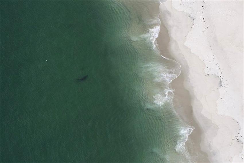 Photo viaCape Cod Shark Hunters