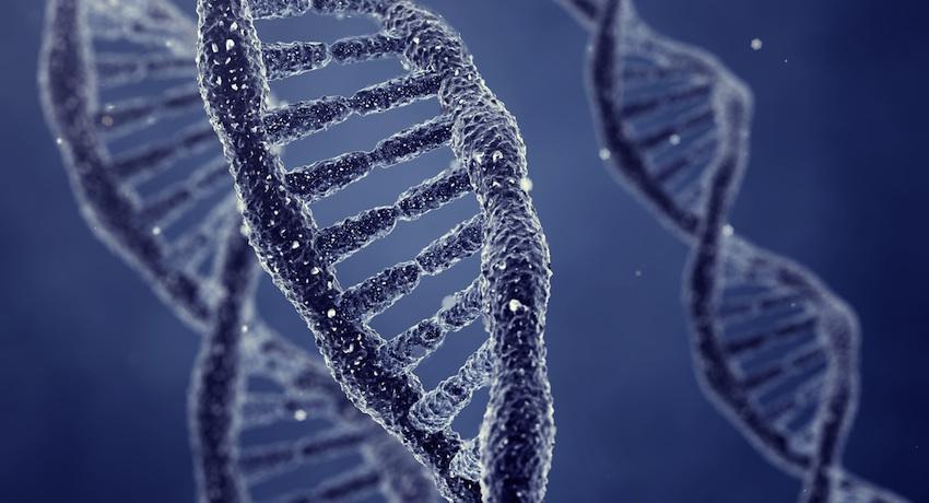 DNAlarge