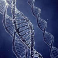 DNAsmall