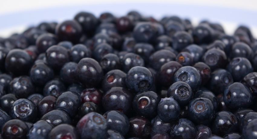 blueberrieslarge