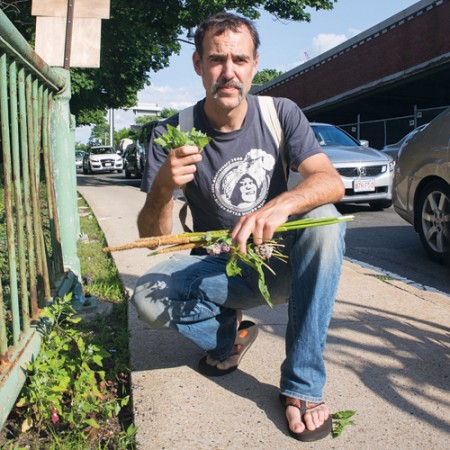 edible-wild-plants-boston-square