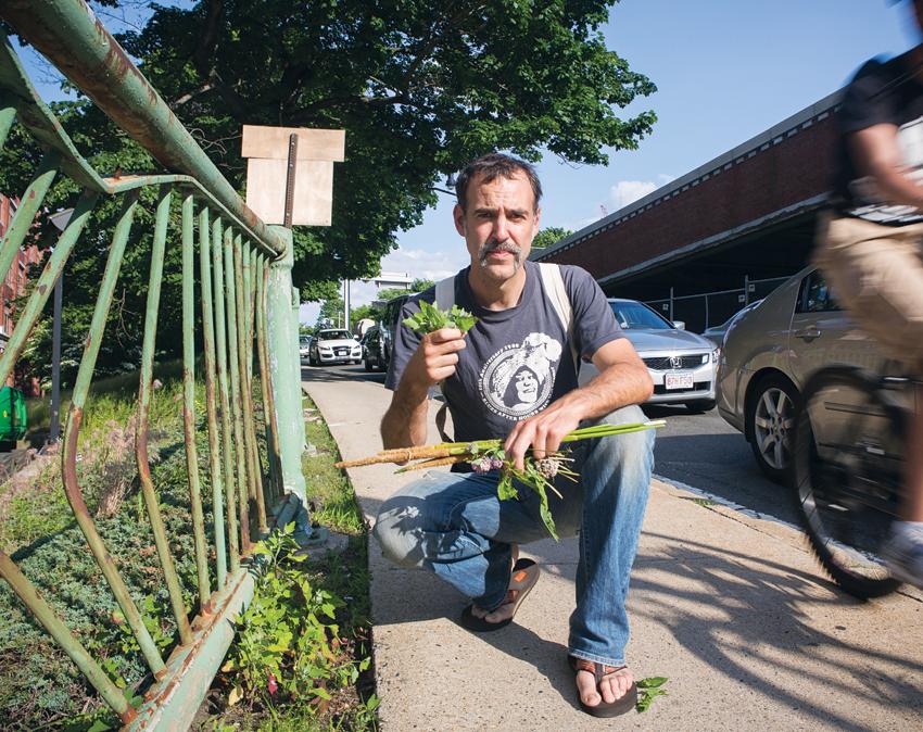 edible-wild-plants-boston