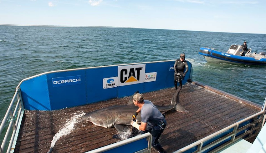 Photo via OCEARCH