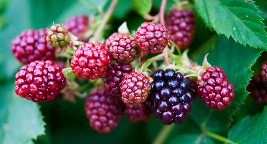 Berries image via shutterstock