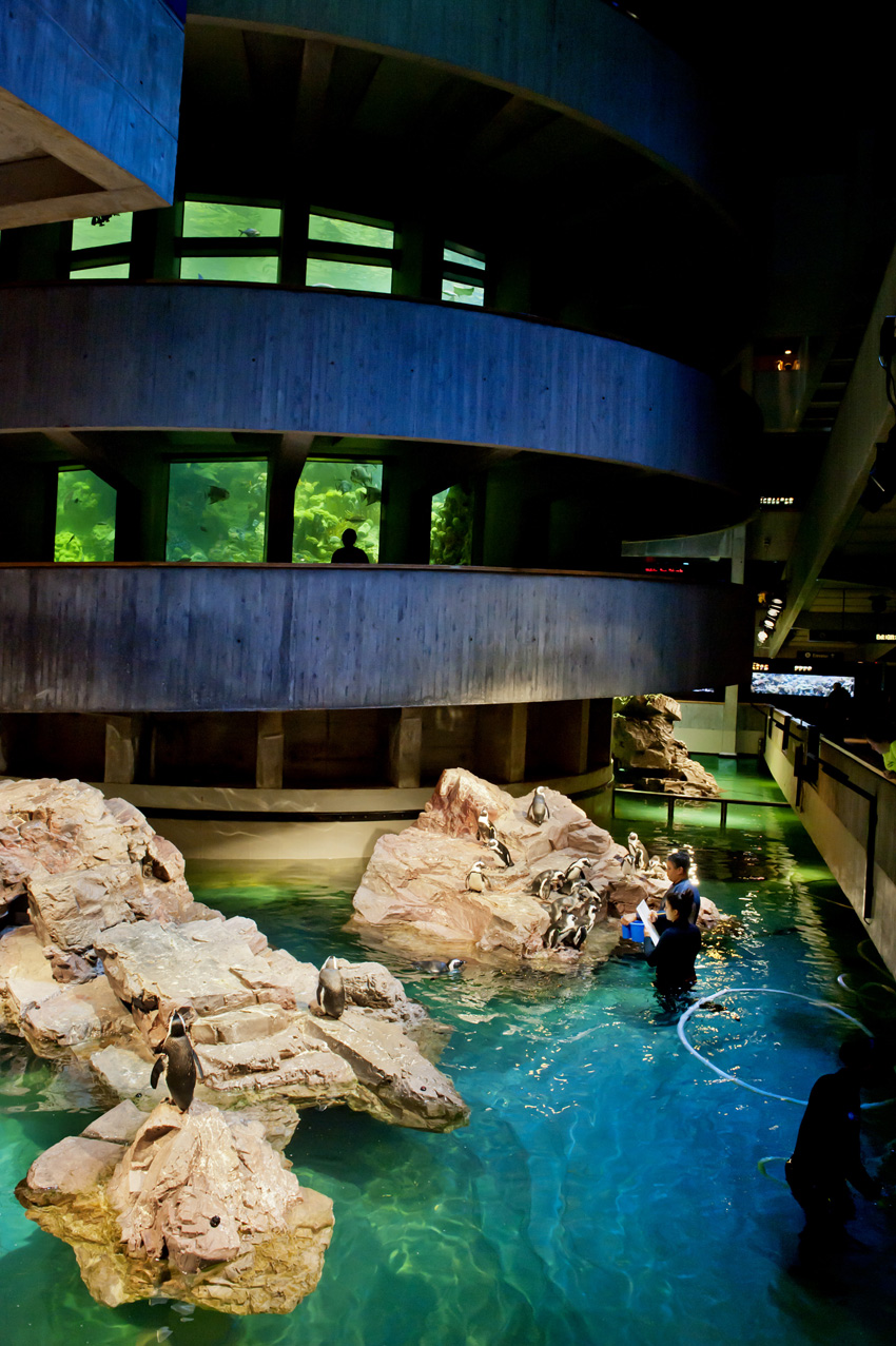 The Giant Ocean Tank towers above the African penguin exhibit at the New England Aquarium.