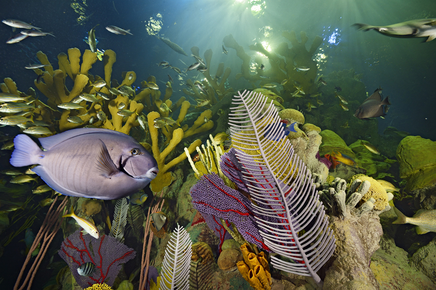 The new Giant Ocean Tank at the New England Aquarium contains nearly 2,000 animals, including more species of Caribbean fishes than ever before.