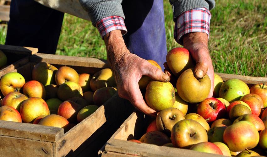 Apple picking season is here! Apples image via shutterstock