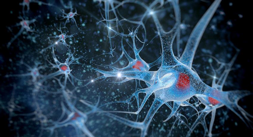Neuron image via shutterstock