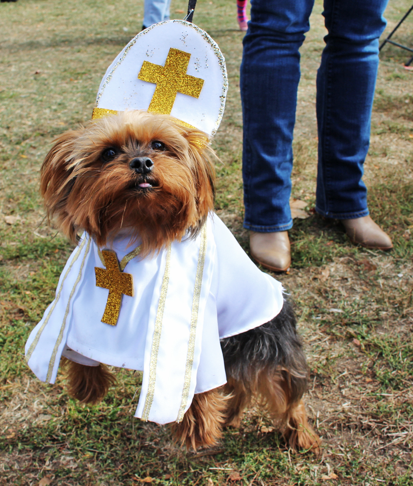 Pope Yorkie (May You Be Blessed)