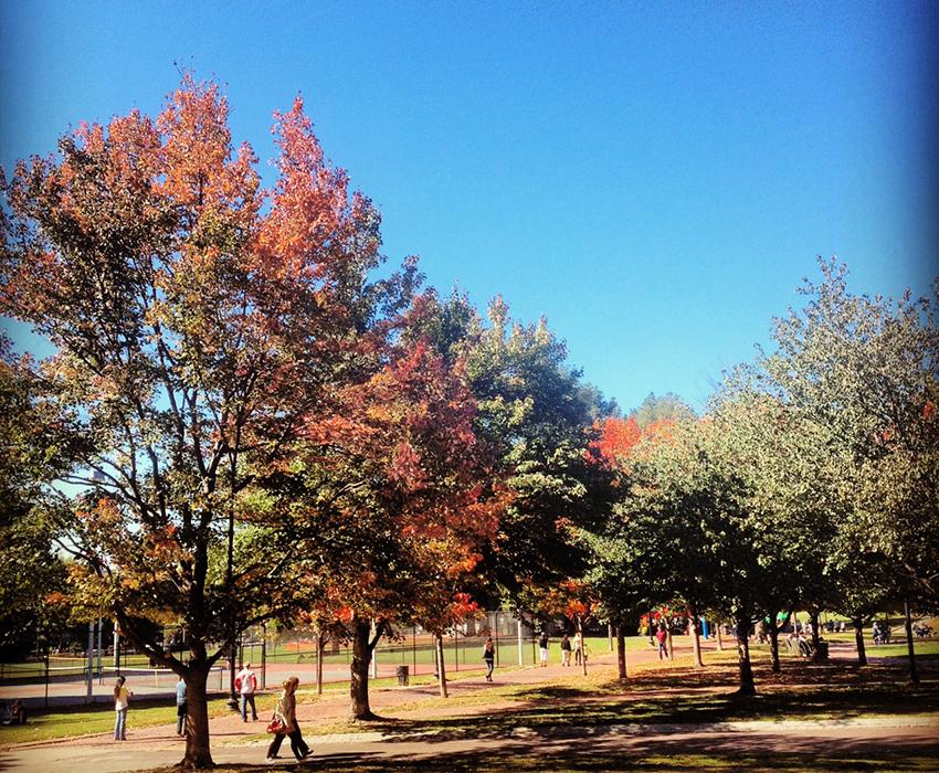 The beginning of fall on Boston Common. Photo by Melissa Malamut