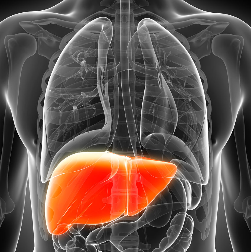 liver image via shutterstock