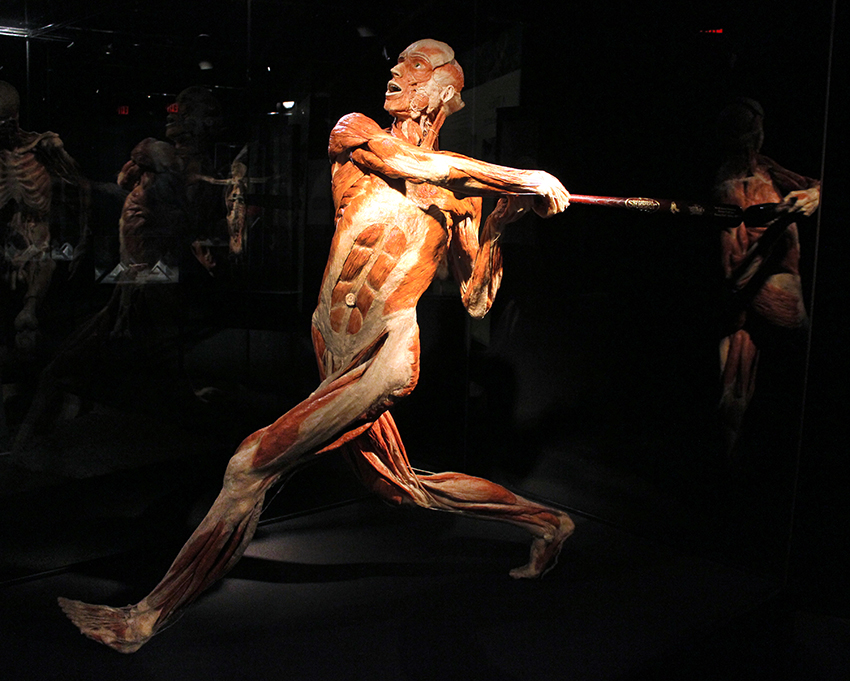Photos Body Worlds Vital Opens At Faneuil Hall Marketplace In Boston