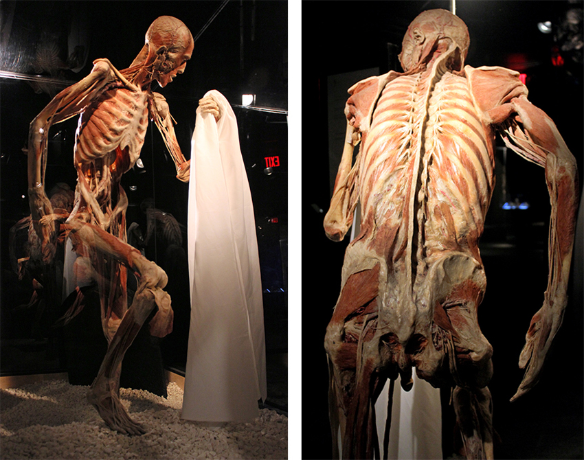 """""""Body Worlds: Vital"""" is heading to its exhibition space in Boston, located on the second floor of Quincy Market at Faneuil Hall Marketplace, on Friday, Nov."""