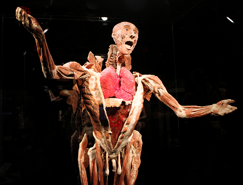 photos: body worlds vital opens at faneuil hall marketplace in boston,