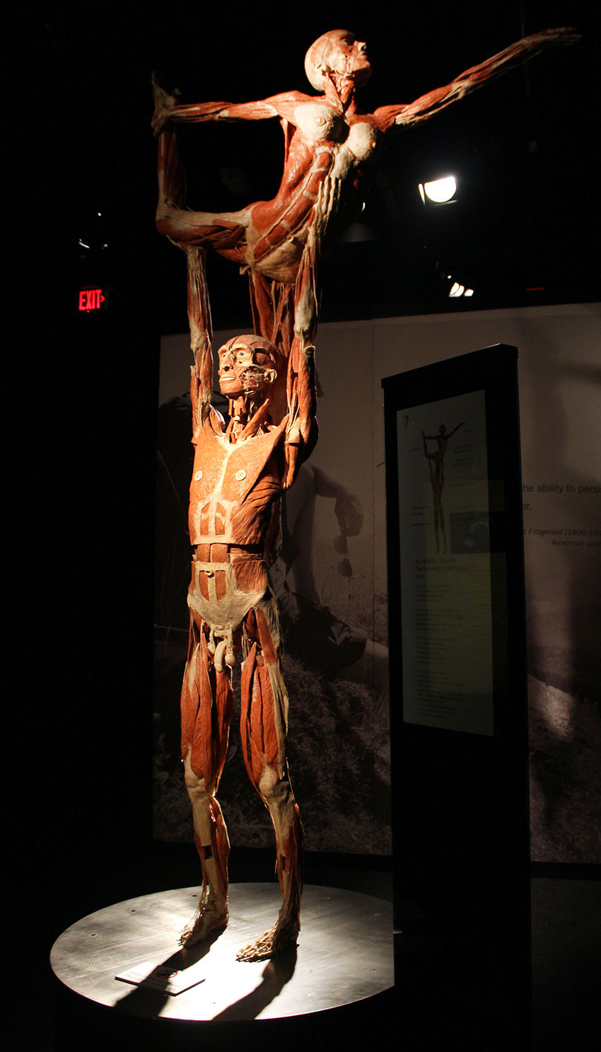 Photos Body Worlds Vital Opens At Faneuil Hall