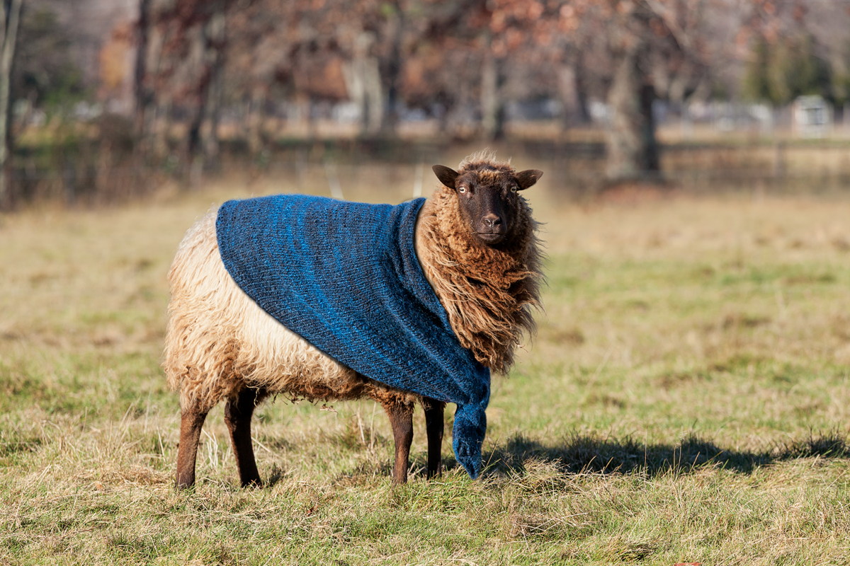 sheep farm to sweater