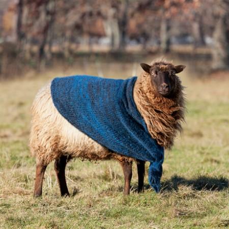 news_sheepFEATURE