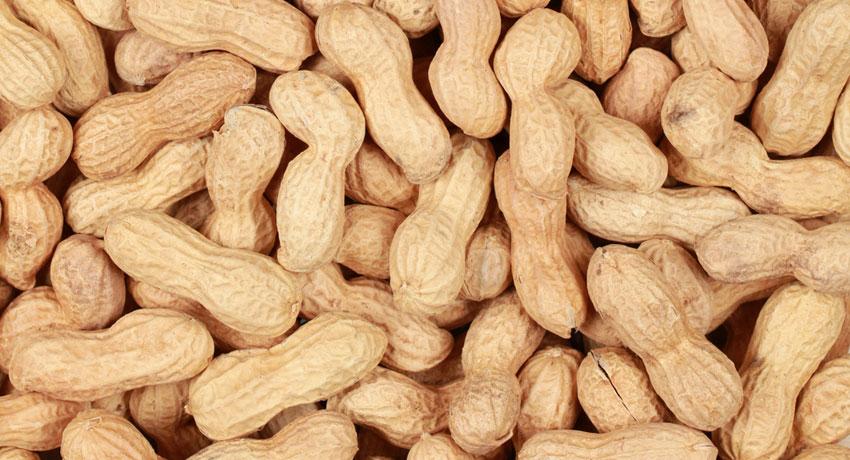 Peanut image via shutterstock