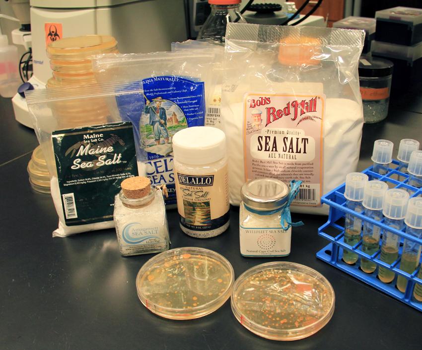 chefology-salt-microbes-1
