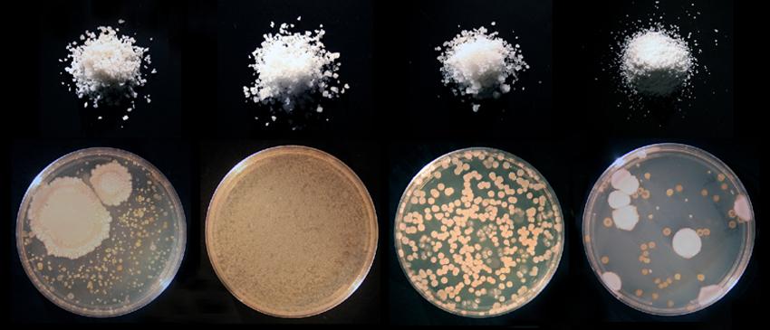 chefology-salt-microbes-2