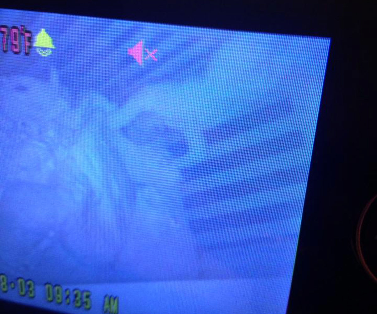 That baby is doing a handstand in her crib. Photo via Sommer Sherrod.