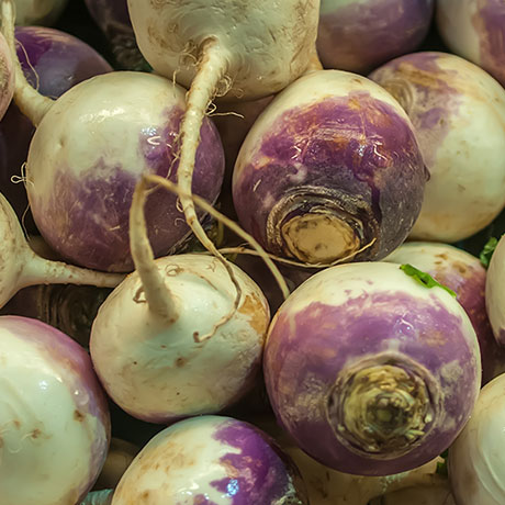 turnips-square