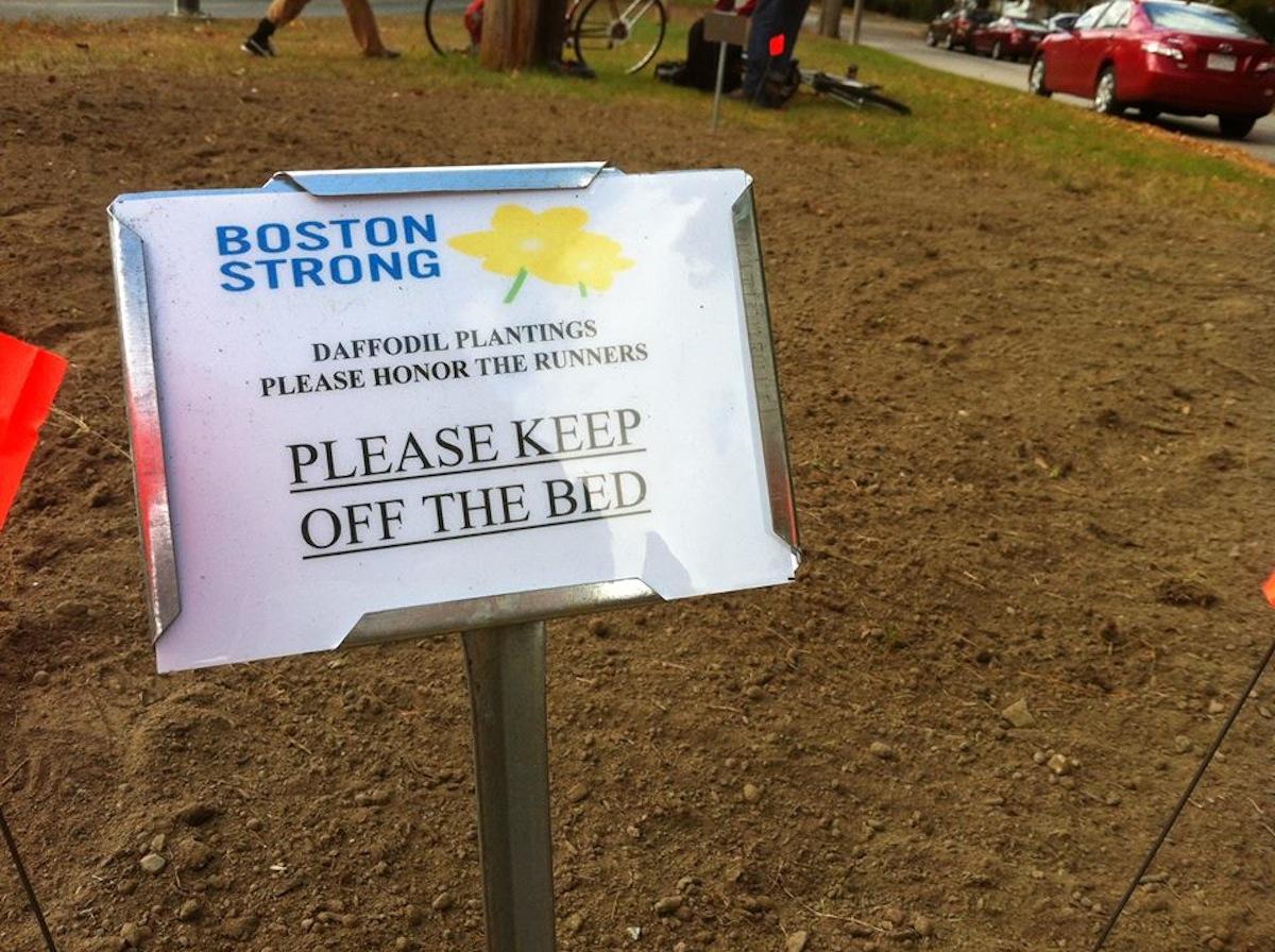 Photo via Marathon Daffodils
