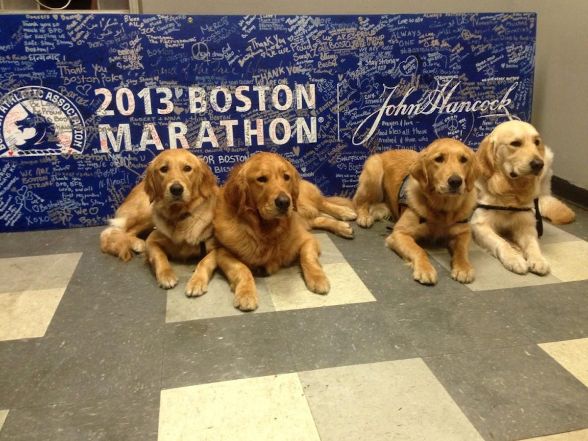 Photo via Lutheran Church Charities K-9 Comfort Dogs
