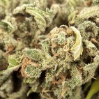marijuana-square