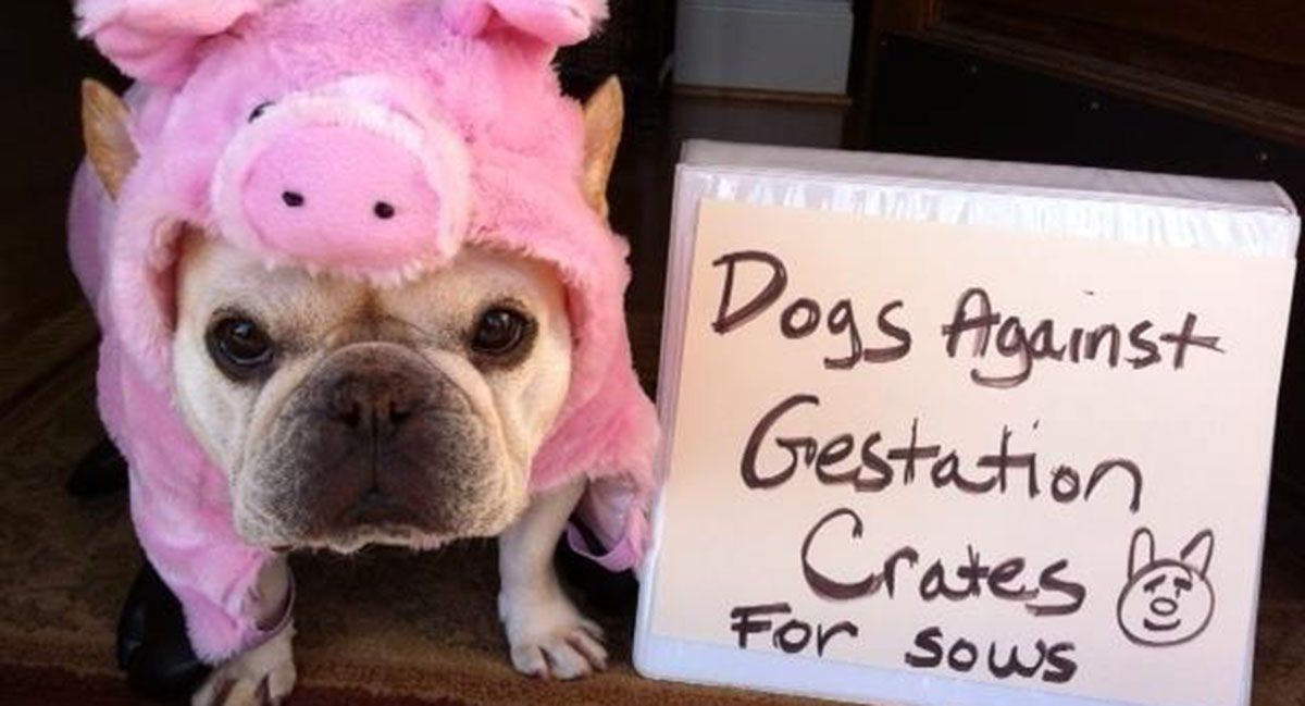 Image via Pups for Pigs Rally