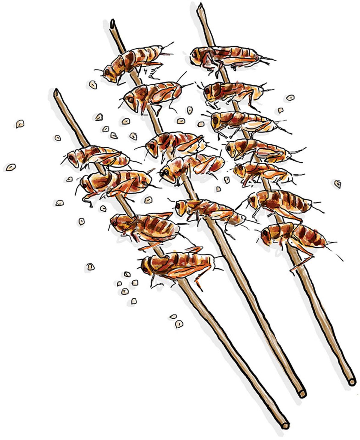 Entomophagy, Uni
