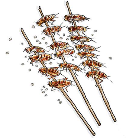 sqfood_bugs32