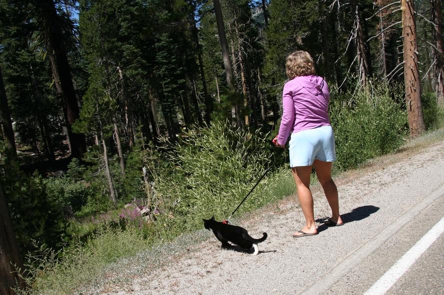 Cat on leash by Dan Phiffer on Flickr