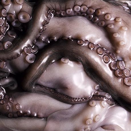 octopus sq