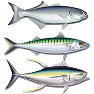 seafoodlp3