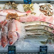 seafoodlp4