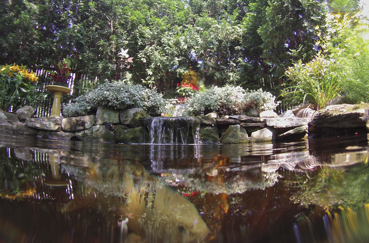 Backyard koi ponds and water gardens are a growing trend for Garden pond depth