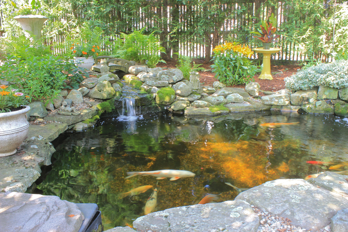 Backyard koi ponds and water gardens are a growing trend for Garden pond videos