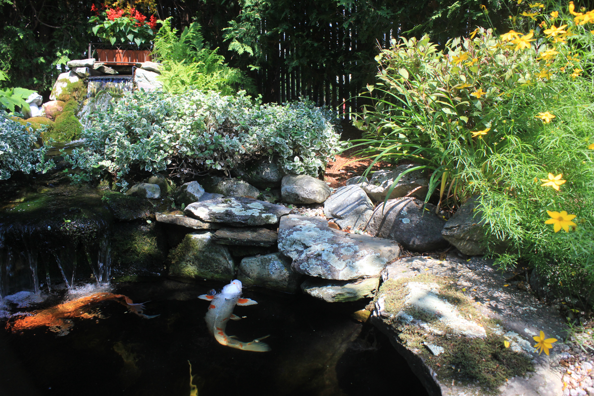 Koi ponds and water gardens make for backyard bliss for Koi pool water gardens thornton