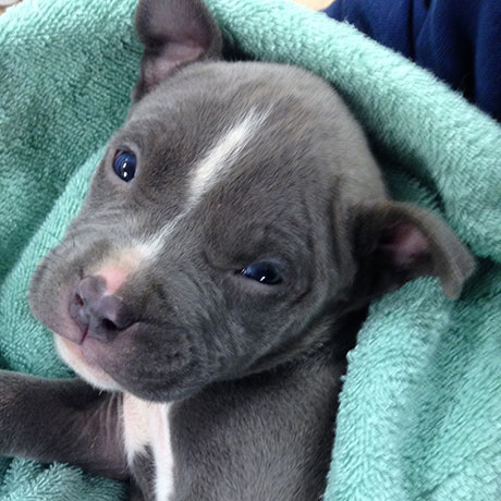puppy-square