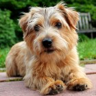 Dog photo via Shutterstock